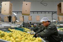 El Gobernador Juan Manzur celebró la apertura del mercado de India